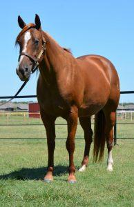 reining-34